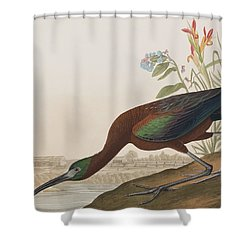 Glossy Ibis Shower Curtain by John James Audubon