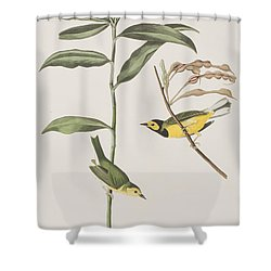 Hooded Warbler  Shower Curtain by John James Audubon