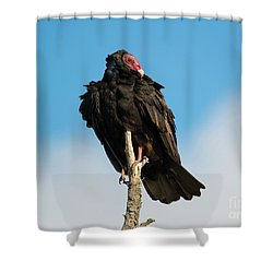 Looking For A Meal Shower Curtain by Mike Dawson