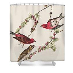 Purple Finch Shower Curtain by John James Audubon