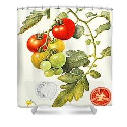 Tomatoes Shower Curtain by Margaret Ann Eden