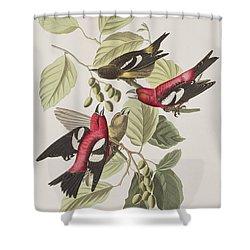 White-winged Crossbill Shower Curtain by John James Audubon