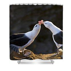 Black-browed Albatross Couple Shower Curtain by Jean-Louis Klein & Marie-Luce Hubert