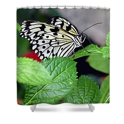 Paper Kite Butterfly No. 3 Shower Curtain by Sandy Taylor