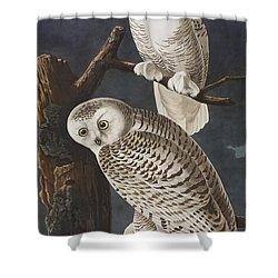 Snowy Owl Shower Curtain by John James Audubon