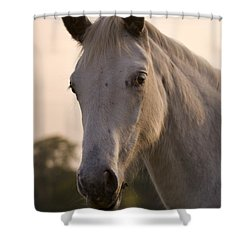 The Horse Portrait Shower Curtain by Angel  Tarantella