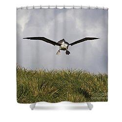 Black-browed Albatross Shower Curtain by Jean-Louis Klein & Marie-Luce Hubert