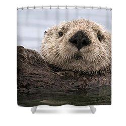 Sea Otter Elkhorn Slough Monterey Bay Shower Curtain by Sebastian Kennerknecht