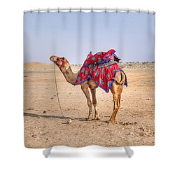 Thar Desert - India Shower Curtain by Joana Kruse