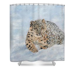 Snow Leopard Shower Curtain by David Stribbling