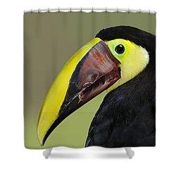 A Bird For His Bill.. Shower Curtain by Nina Stavlund