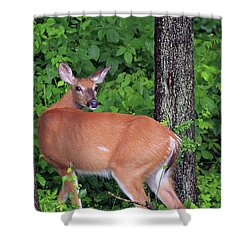 A Doe Within The Trees Shower Curtain by Karol Livote