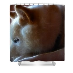 A Dogs Life Shower Curtain by Stuart Turnbull