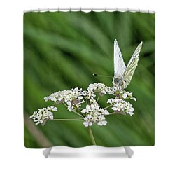 A Green-veined White (pieris Napi) Shower Curtain by John Edwards