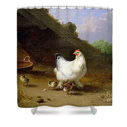 A Hen With Her Chicks Shower Curtain by Eugene Joseph Verboeckhoven