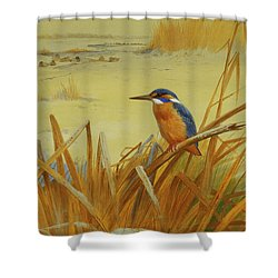 A Kingfisher Amongst Reeds In Winter Shower Curtain by Archibald Thorburn