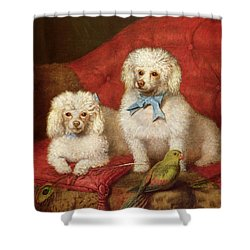 A Pair Of Poodles Shower Curtain by English School