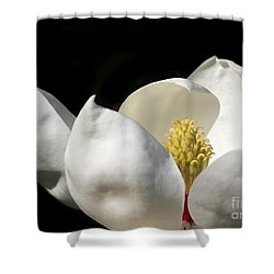 A Peek Inside A Magnolia Shower Curtain by Sabrina L Ryan
