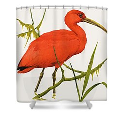 A Scarlet Ibis From South America Shower Curtain by Kenneth Lilly