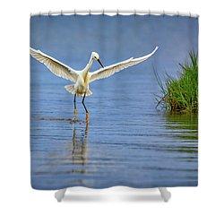 A Snowy Egret Dip-fishing Shower Curtain by Rick Berk