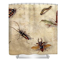 A Study Of Various Insects, Fruit And Animals Shower Curtain by Jan Van Kessel the Elder