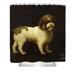 A Water Spaniel Shower Curtain by George Stubbs