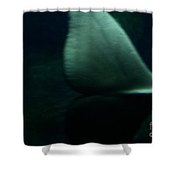 A Whale's Tale Shower Curtain by Linda Knorr Shafer