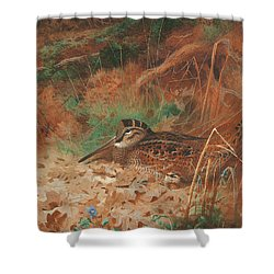 A Woodcock And Chick In Undergrowth Shower Curtain by Archibald Thorburn