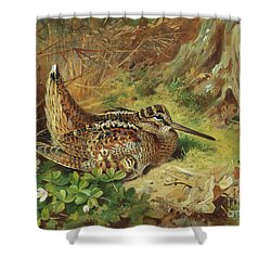 A Woodcock And Chicks Shower Curtain by Archibald Thorburn