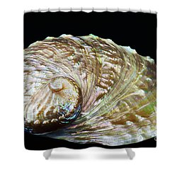 Abalone Shell Shower Curtain by Bill Brennan - Printscapes