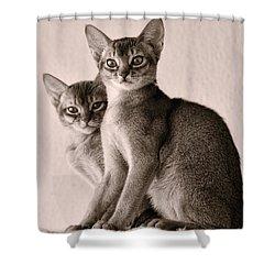 Abyssinian Kittens Shower Curtain by Ari Salmela