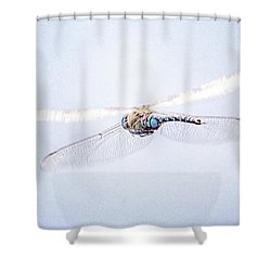 Aeshna Juncea - Common Hawker In Shower Curtain by John Edwards