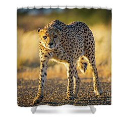 African Cheetah Shower Curtain by Inge Johnsson