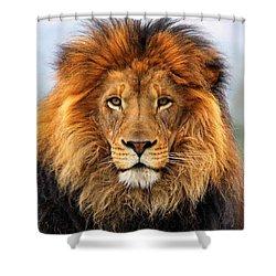 African Lion Shower Curtain by Ellen Henneke