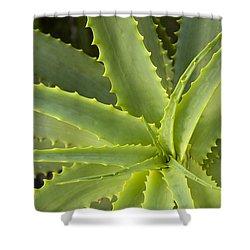 Agave  Big Sur California Shower Curtain by Sebastian Kennerknecht