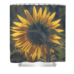 Aglow Shower Curtain by Chris Fletcher