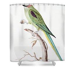 Alexandrine Parakeet Shower Curtain by Nicolas Robert