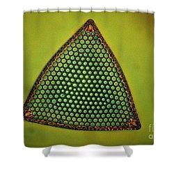 Algae, Diatom, Triceratium Ladus, Lm Shower Curtain by Eric Grave