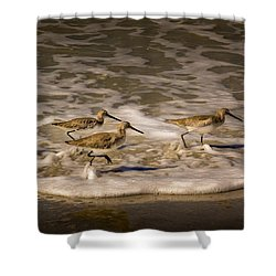 All Together Now Shower Curtain by Marvin Spates