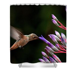 Allen's Hummingbird At Breakfast Shower Curtain by Mike Herdering