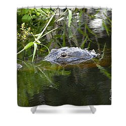 Alligator Hunting Shower Curtain by David Lee Thompson