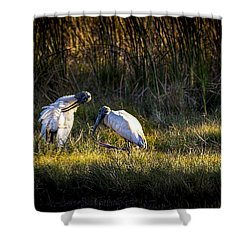 Almost Bed Time Shower Curtain by Marvin Spates