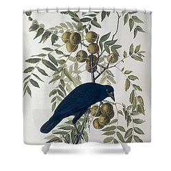 American Crow Shower Curtain by John James Audubon