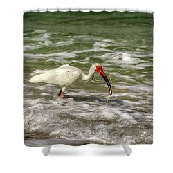 American White Ibis Shower Curtain by Chrystal Mimbs