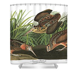 American Woodcock Shower Curtain by MotionAge Designs