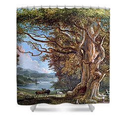 An Ancient Beech Tree Shower Curtain by Paul Sandby