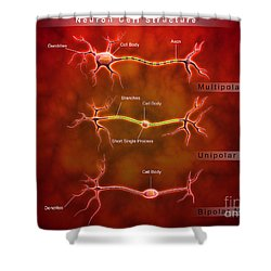 Anatomy Structure Of Neurons Shower Curtain by Stocktrek Images