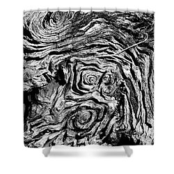 Ancient Stump Shower Curtain by Christopher Holmes