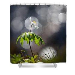 Anemone  Shower Curtain by Rikard Strand