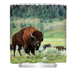 Angry Buffalo Shower Curtain by Todd Klassy